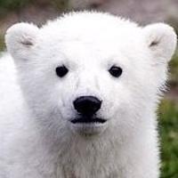 하얀북극곰님의 프로필 사진