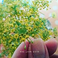 JIN님의 프로필 사진