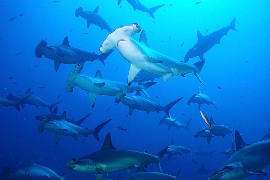 45666a79170 상어 피부 구조를 모사한 자연모사기술 : 네이버 포스트