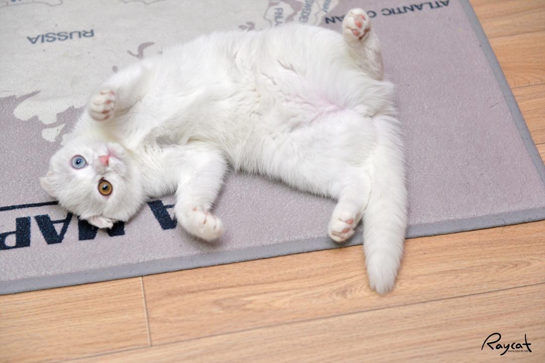 고양이는 왜 발톱으로 여기저기 긁고 다닐까?
