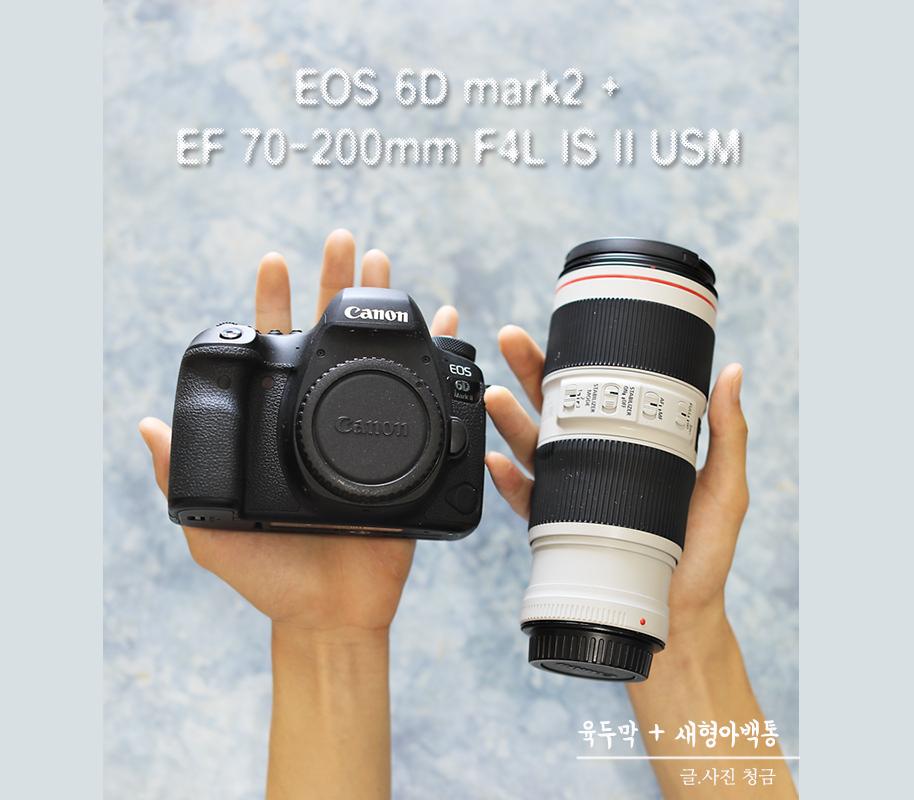 요즘 내가 제일 좋아하는 조합 EOS 6D mark2 + EF 70-200mm F4L IS