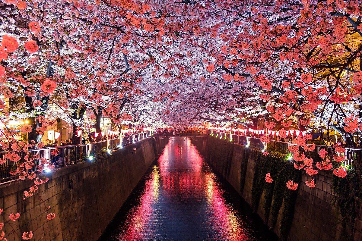 tokyo sakura - Ранняя весна - в Корее цветут деревья