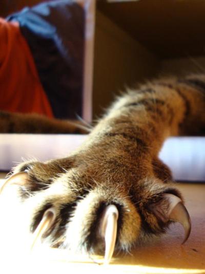 고양이 발톱깎기, 쉽게 발톱깎는 법