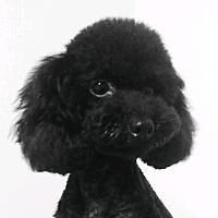 코디걸스님의 프로필 사진