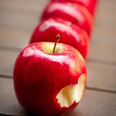 우리 강아지가 먹으면 좋은 과일(사과 바나나 9가지)