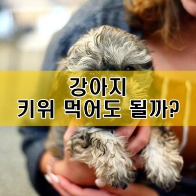 강아지 복숭아 키위 절대 먹으면 안될까?