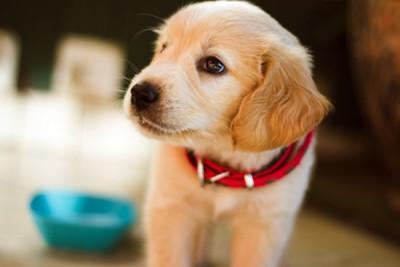 강아지 냄새의 원인과 냄새제거방법 확인하기!