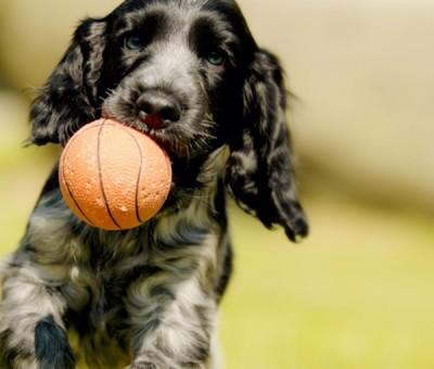 강아지 애견용품 가장 기본적인 아이템