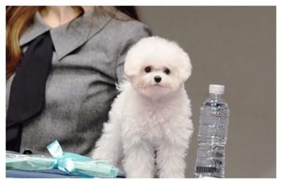 개팔자가 상팔자 부러운 '연예인 강아지' 베스트 8