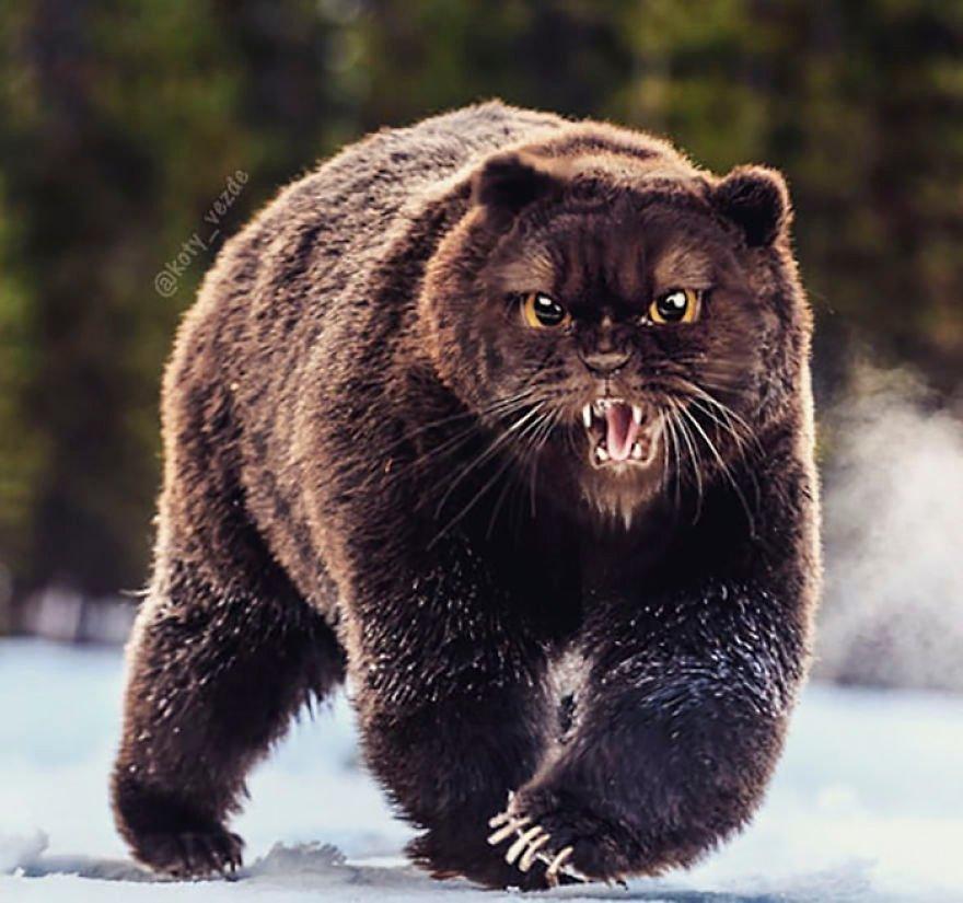 animals-photoshopped-cats-koty-vezde-53-