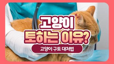 고양이 토하는 이유 및 대처법은?