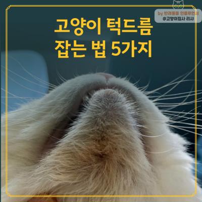 고양이 턱드름 잡는 법 5가지