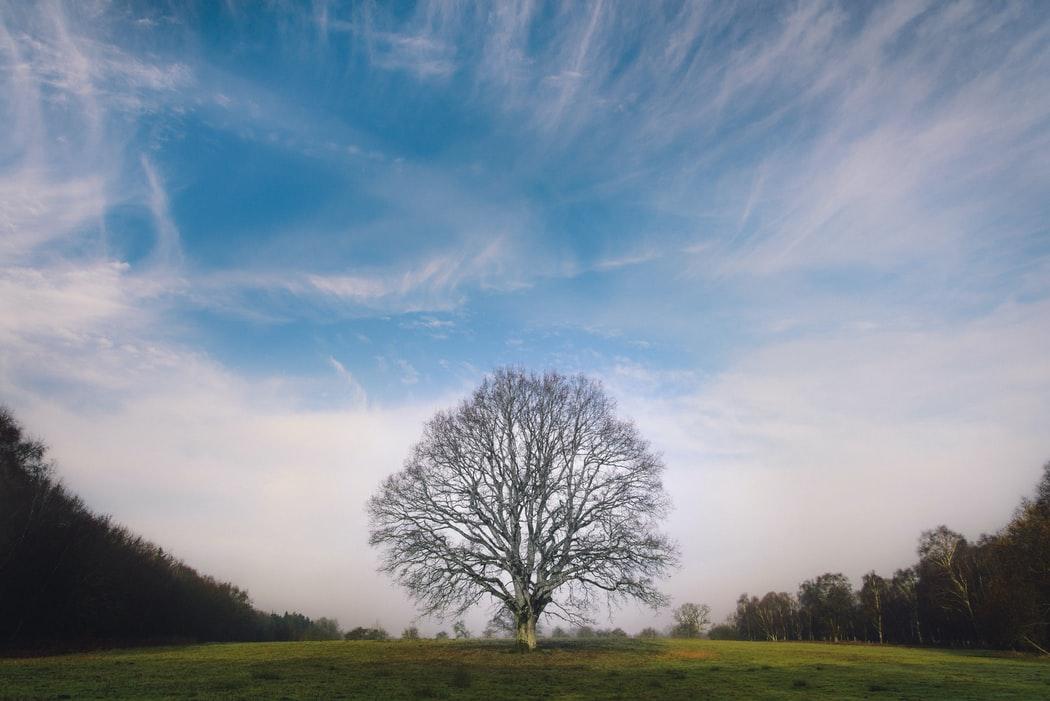 [초승달에 걸터앉아] #01. 미동도 하지 않는 저 나무는 무슨 생각을 할까