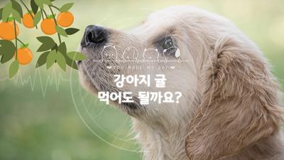 강아지 귤 먹어도 되나요? 주의할 점은?