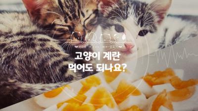 고양이 계란 먹어도 되는 음식일까? 주의사항은?