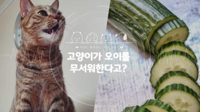 고양이가 오이를 무서워한 진짜 이유는?