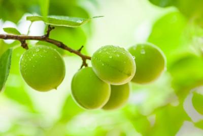 6월 제철 과일, 매실의 효능은?
