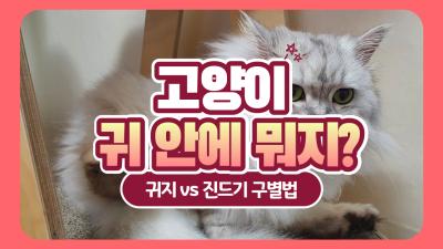 고양이 귀지 vs 귀진드기, 어떻게 구별할까?