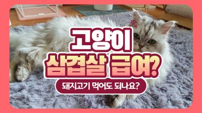 고양이 돼지고기 삼겹살 왜 안 주는 걸까?