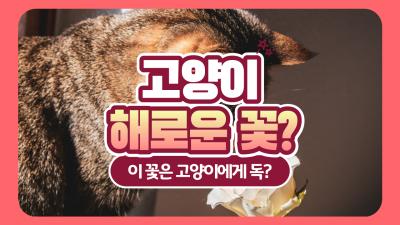고양이에게 해로운 꽃, 튤립과 카네이션도 위험해!