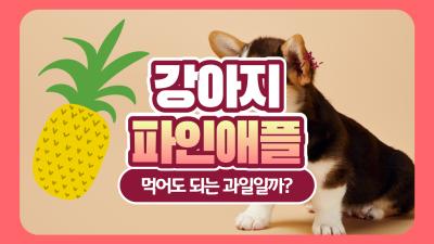 강아지 파인애플 먹어도 되는 과일일까?(f. 주의점)