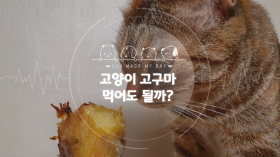 고양이 고구마 먹어도 되는 음식일까?