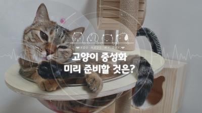 고양이 넥카라와 환묘복, 중성화 수술 준비 용품 또 뭐가 필요할까?