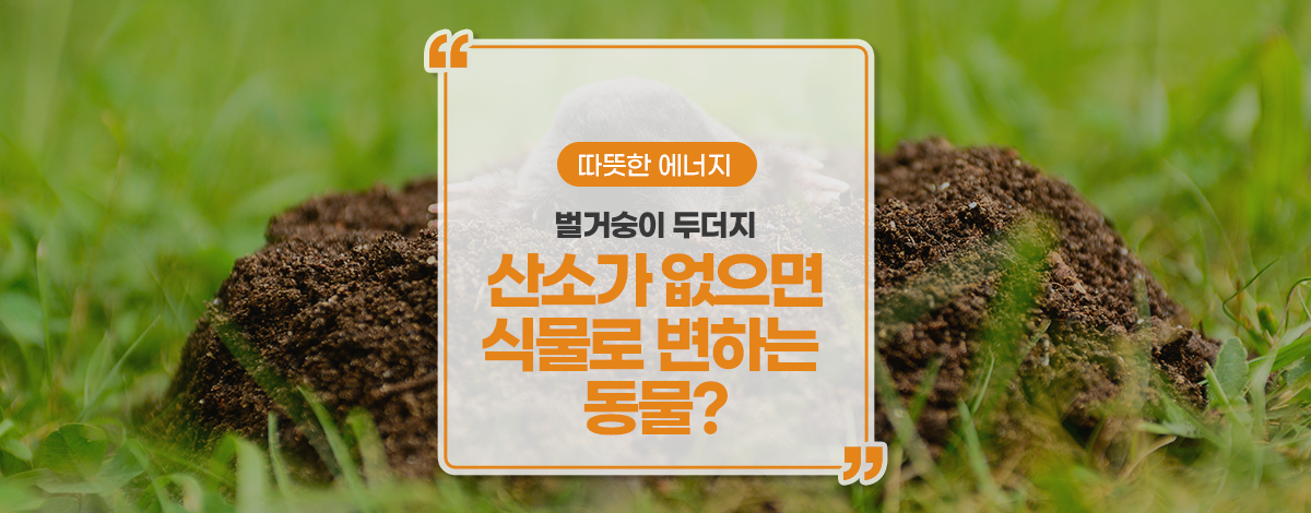 산소가 없으면 식물로 변하는 동물?!?